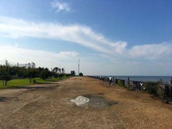 養老川河口の釣り場14