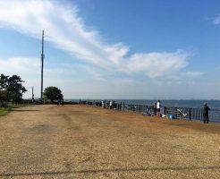 養老川河口の釣り場16
