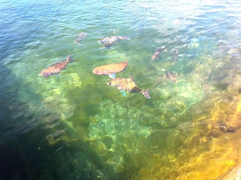 太海フラワー磯釣りセンター27