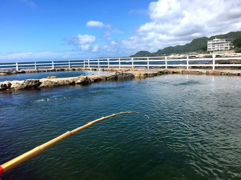 太海フラワー磯釣りセンター38